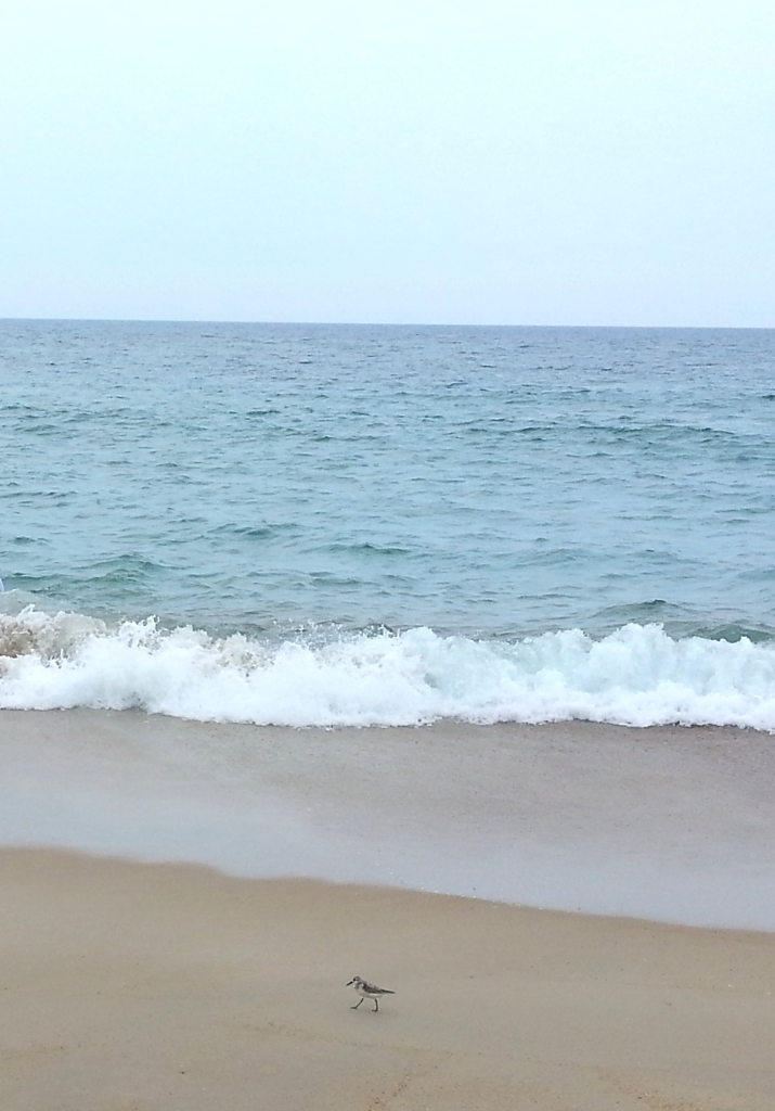 ocean & bird