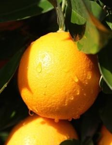 orange__large